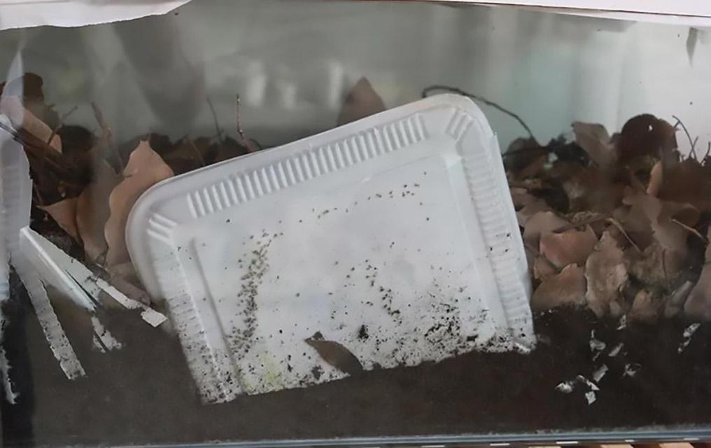 260-可堆肥塑料等同于生物降解塑料?配图