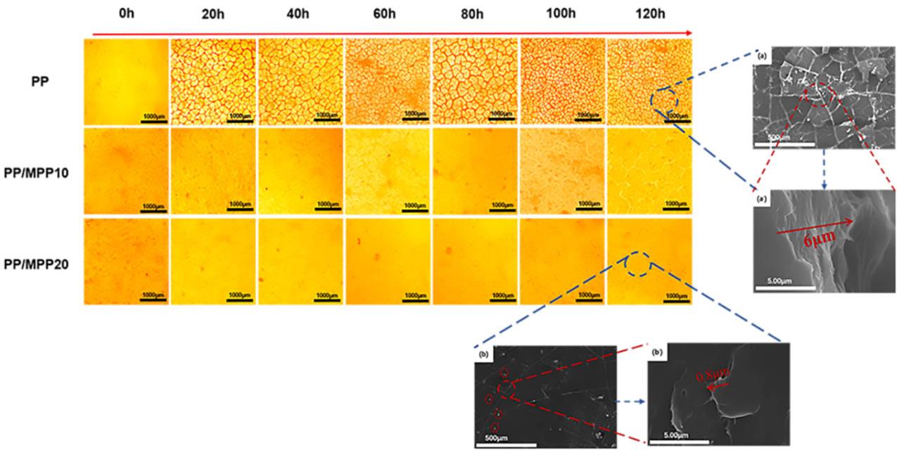 257-01-紫外光辐照过程中PP以及PPMPP表面裂纹变化